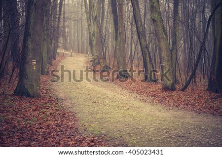 Forest road with dark trees on foggy late autumn day - stock photo
