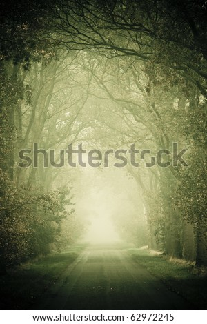 Forest road with fog in autumn - stock photo