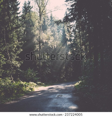 forest road with sun rays in the morning in the countryside - retro, vintage style look - stock photo