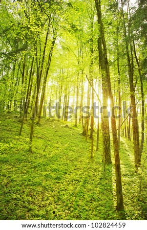 Forest scene - stock photo