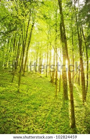 Forest scene - stock photo