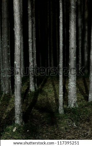forest scene by night - stock photo
