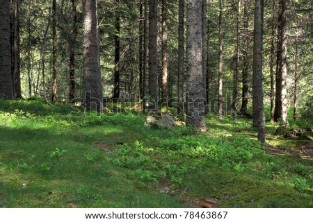 Forest scene (HDR version) - stock photo