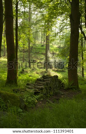 forest scene in summer in macclesfield forest, england