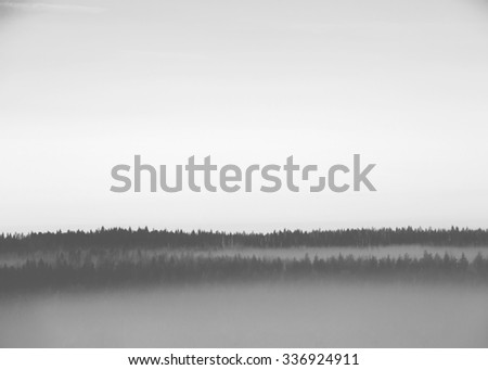 Forest scene with a fog. An image taken during cold morning. Fog is covered around the forest. Image in black and white. - stock photo