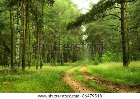 forest scenery near Berlin, Germany - stock photo