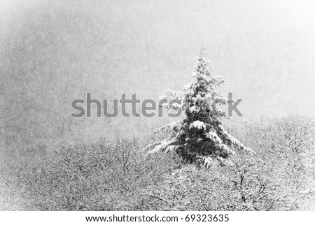 forest scenery with lonely fir and snowfall - stock photo