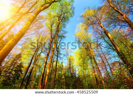 Forest scenery with the sun illuminating the colourful tall treetops and clear blue sky - stock photo
