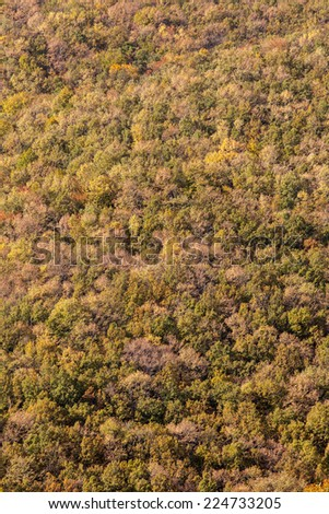 Forest seen from above. Background - stock photo