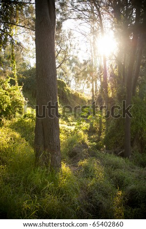 Forest setting with sun streaming through and highlighting trees and grass - stock photo