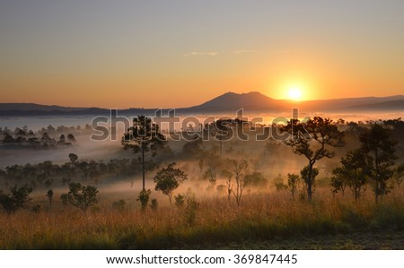 Forest silhouette Sunrise at Park north Thailand, Asia Wild coniferous wood in a morning fog, forest background,Beautiful autumn morning on the view point above the deep forest valley in national park