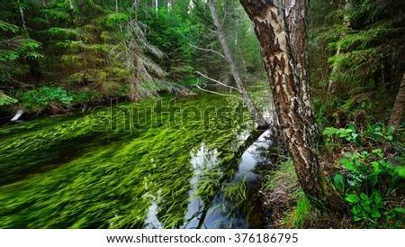 Forest spring at the beginning of the river in Endla nature park, Estonia