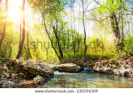 Forest stream and green trees. Beautiful summer landscape.  - stock photo