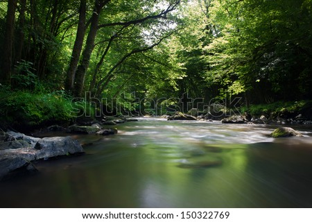 Forest stream Dordogne, France. - stock photo