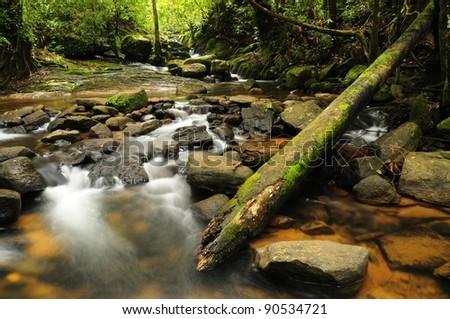 Forest stream in Sri Lanka - stock photo