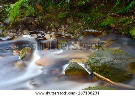 Forest Stream - South Africa - stock photo