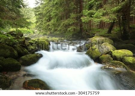 Forest stream. Tatra national park, the Carpathians. - stock photo