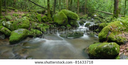 forest stream with mossy rocks - stock photo