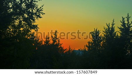 forest sunset - stock photo