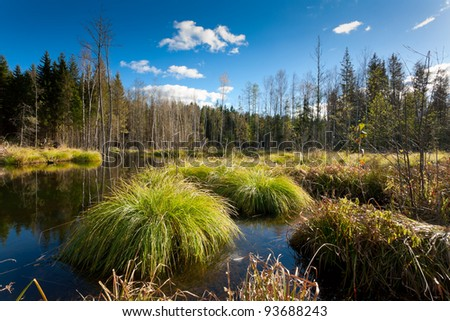forest swamp, wetland - stock photo