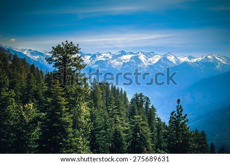 Forest & The Mountains, Sequoia National Park, California   - stock photo