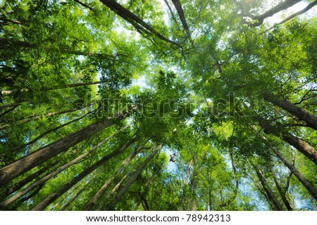 Forest Top Canopy at Lower Suwannee National Wildlife Refuge, FL - stock photo