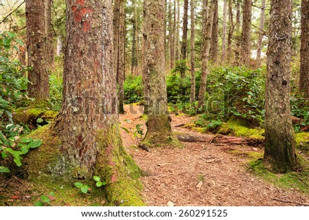 Forest trail - stock photo