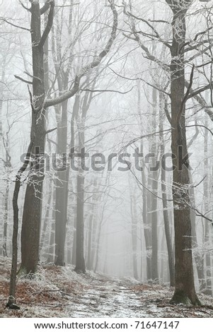 Forest trail among frosted beech trees on a foggy winter morning. - stock photo