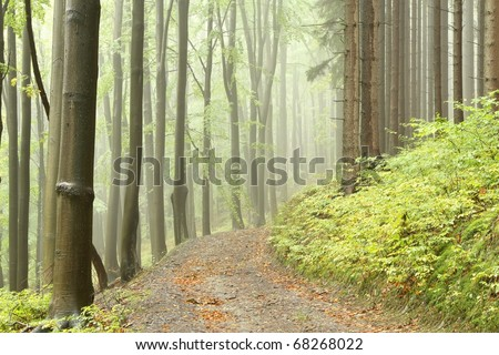 Forest trail among the deciduous and coniferous trees on a foggy autumn day. - stock photo