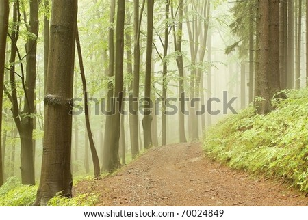 Forest trail among the deciduous and coniferous trees on a foggy spring morning. - stock photo