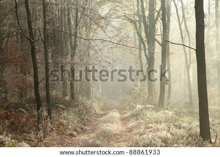 Forest trail among the plants covered with frost on a cold November morning. - stock photo