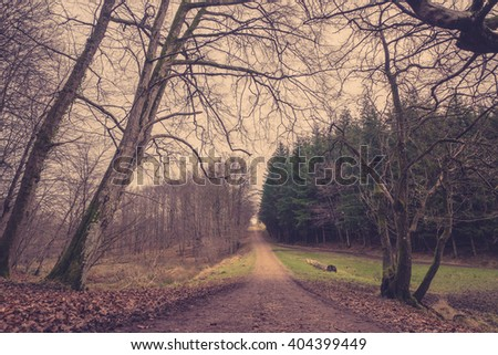 Forest trail at dawn in the fall - stock photo