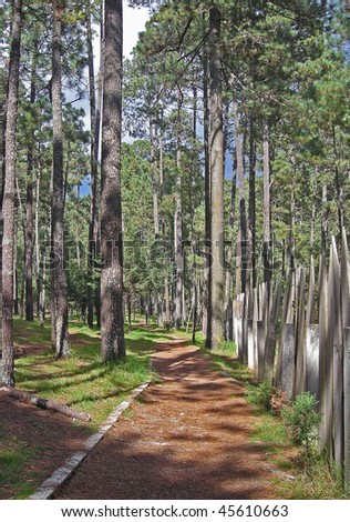 Forest trail in a state park in Chiapas, Mexico - stock photo