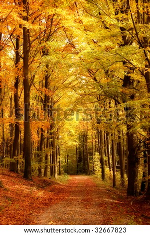 Forest trail in autumn - colorful forest