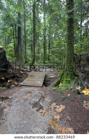 Forest trail in coastal mountains of British Columbia near Vancouver (Canada) - stock photo