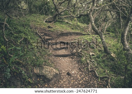 Forest trail in Featherbed Nature Reserve. Knysna. Western Cape. South Africa. - stock photo