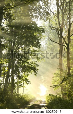 Forest trail on a foggy spring morning after the night-time rain. - stock photo