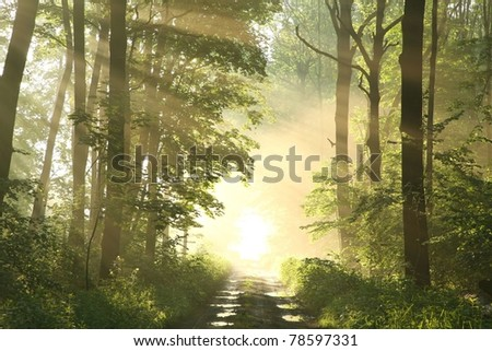Forest trail on a foggy spring morning after the rain. - stock photo
