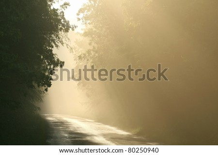 Forest trail surrounded by mist resulting from heavy rainfall during the sunset. - stock photo