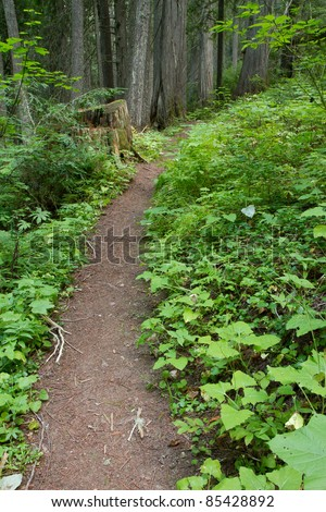 Forest Trail Through Thick Vegetation - stock photo