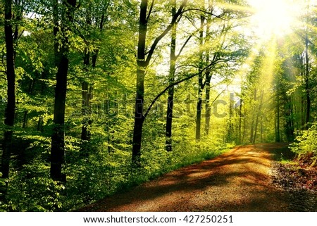 Forest trail with sunlight - stock photo