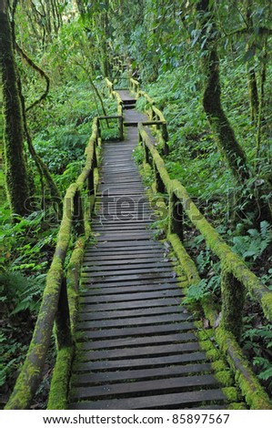 Forest trail(Wooden bridge covered with moss), Doi Inthanon national park, Thailand - stock photo