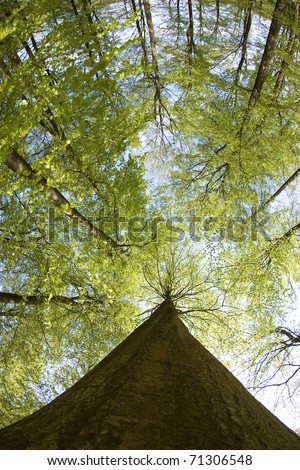 Forest tree in spring fish-eye lens. Woods. - stock photo