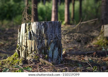 forest tree stump - stock photo
