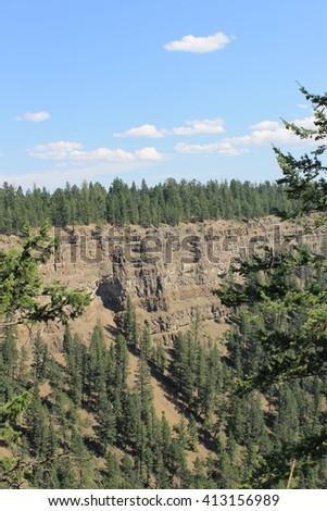 Forest treeline on chasm ridge - stock photo