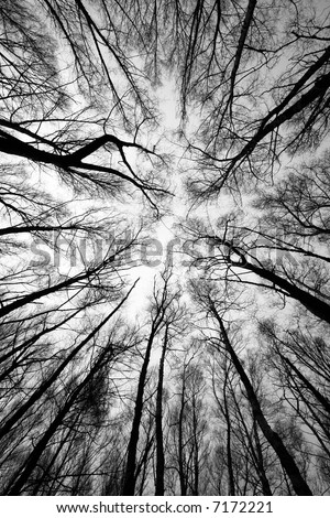 forest trees after fire - black and white - stock photo