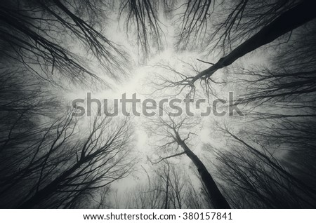 forest trees against sky at night - stock photo