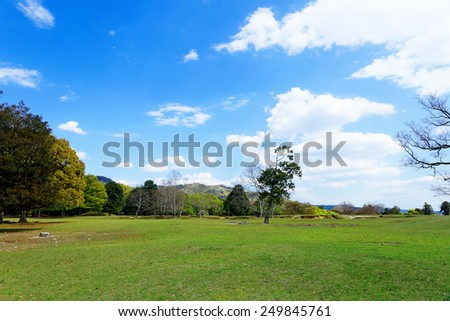 forest trees at sunny day park - stock photo