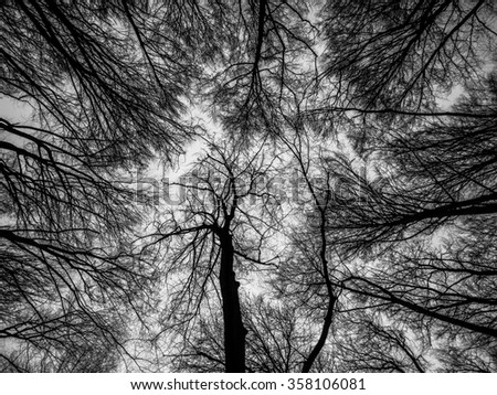 Forest trees branches bare, black and white