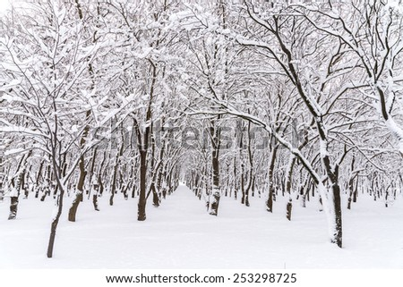 Forest Trees Covered In Winter Snow - stock photo